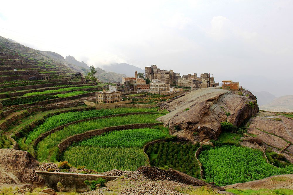 Coffee terraces in the village of Bani Murra